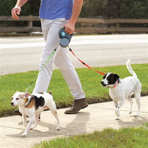 how to leash a puppy how to leash your