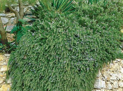 Plante Terre Acide by Les Plantes Qui Prennent Soin Du Sol Conseils Jardin