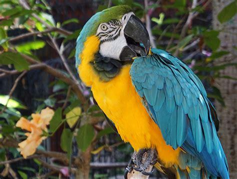 catamaran hotel san diego live cam bird live webcam san diego ca catamaran resort spa