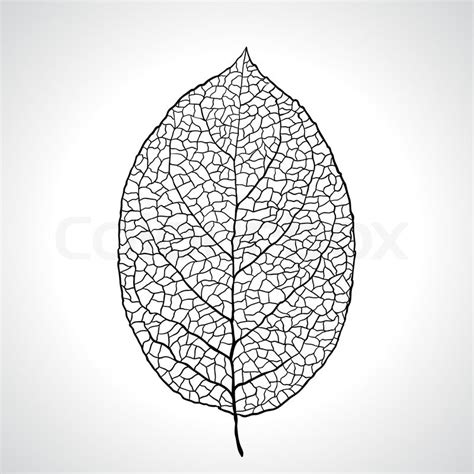 leaf pattern illustrator black macro leaf natural isolated vector illustration