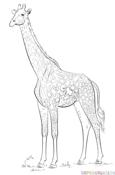 christmas giraffe coloring pages how to draw a realistic giraffe step by step drawing