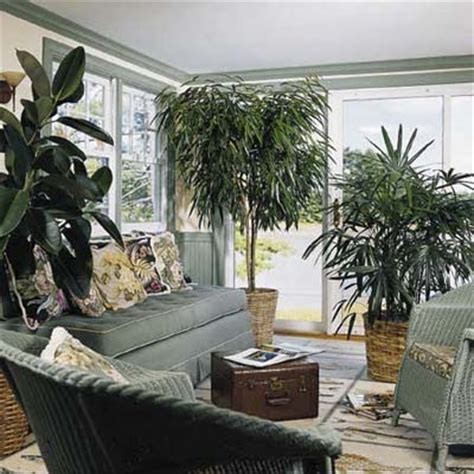 greenery without green thumbs easy houseplants this
