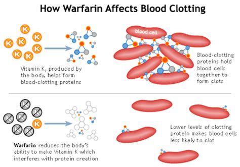 vitamin k vegetables warfarin to clot or not to clot coumadin warfarin