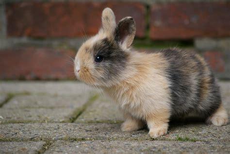 Gantungan Bunny Kopenhagen Bunny 1 bunny 1 jannes pockele flickr