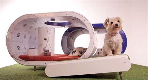 dream dog houses samsung creates the dream house for dogs