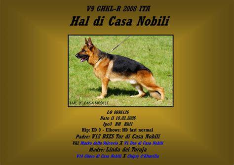 allevamento casa nobili vendita cani pastore tedesco figli di cani di razza