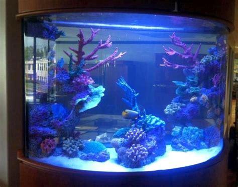 Acrylic Aquarium Acrylic Aquariums Pros And Cons Tropical Fish Keeping