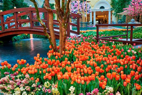 Bellagio Welcomes Spring With A Dynamic Celebration Of Bellagio Flower Garden