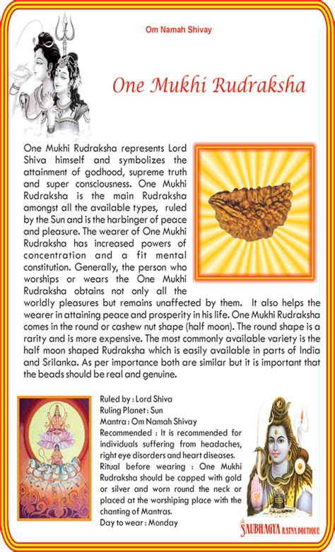 rudraksha meaning and mukhi types ek mukhi rudraksha benefits price indian palm reading