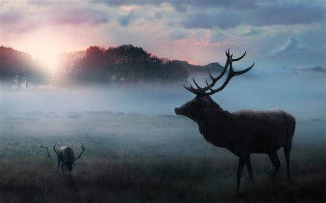 wallpaper deer forest morning sunrise fog winter hd