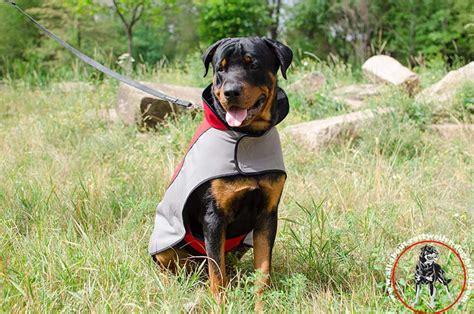 winter coats for rottweilers order rottweiler coat winter walking