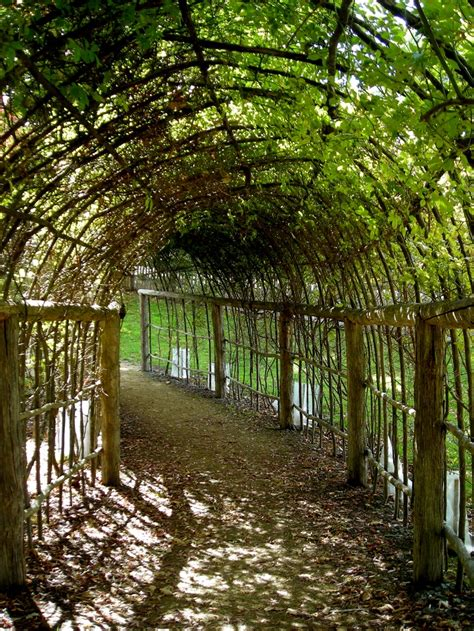grape arbor 35 best images about grape trellis on cable wisteria and geneva