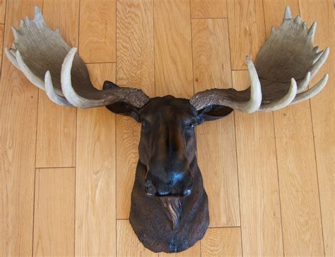 where can i buy diy moose taxidermy the aspirational