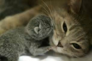 Best cute animal pictures cute puppy pictures adorable kittens