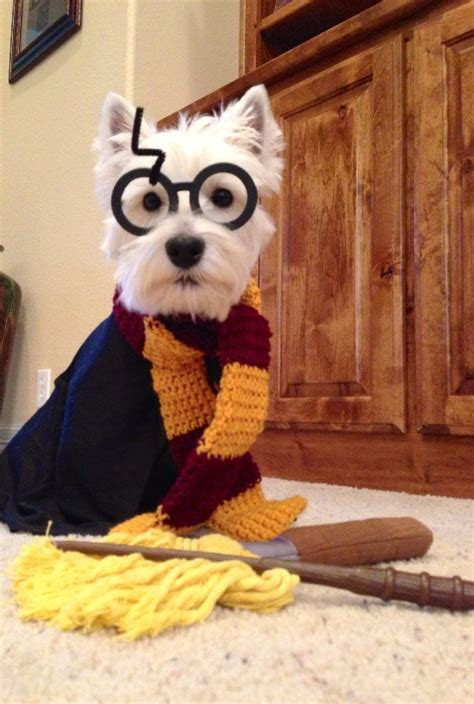 harry potter puppy 17 dogs that harry potter more than you cus