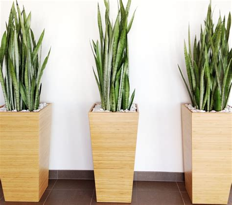 modern indoor plant pots fresh point to the home decor