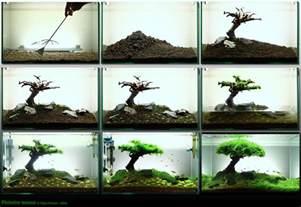 a nicely setup fish tank pics