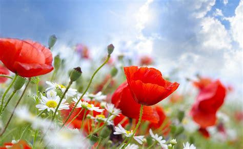 wallpaper bergerak gambar bunga gambar bunga indah dan cantik kumpulan gambar