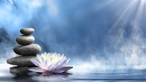 lotus spa white lotus on water harmony stones lotus symbol of