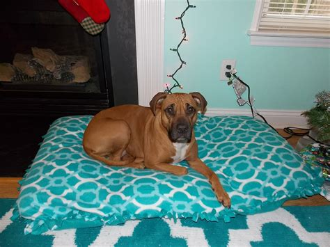 no sew dog bed easy and affordable diy dog bed ideas homestylediary com