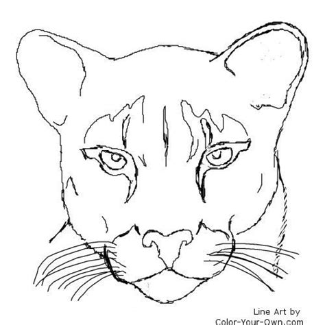 cougar puma mountain lion catamount fantasy coloring