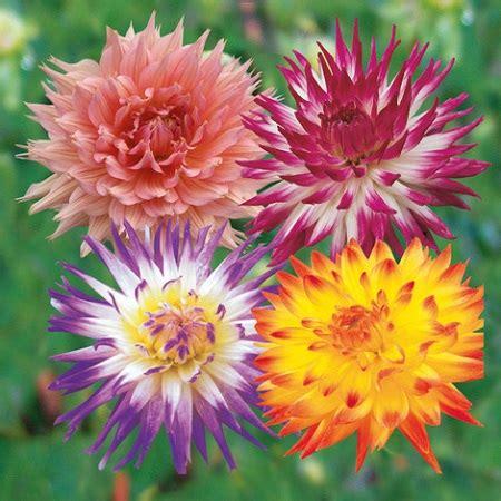 fiori da piantare a marzo quali fiori piantare a marzo