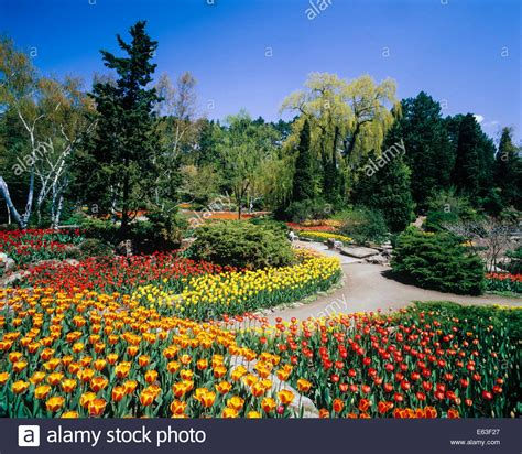 Royal Botanical Gardens Canada Tulips In The Rock Gardens Of The Royal Botanical Gardens In Stock Photo Royalty Free