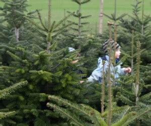 weihnachtsbaum selber schlagen bonn my blog