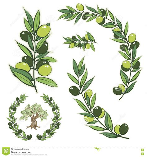 olive vector olive tree branch drawing www pixshark com images
