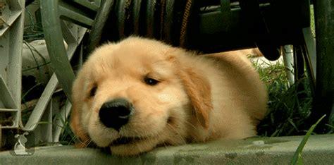 dog animal gif  gifer  malale