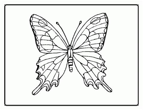 animal coloring butterfly coloring pages beautiful