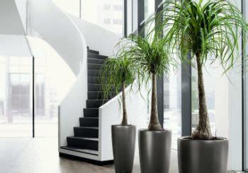 pianta da ufficio progettazione e manutenzione giardini a