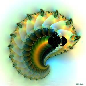 Glow Worm   Animal Wildlife