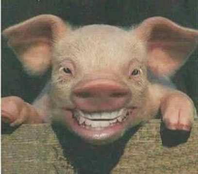 imagenes chistosas de cerdos en navidad el cerdito chistoso muxuflushu youtube