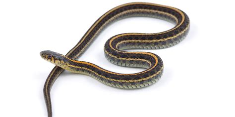 Will A Conditional Discharge Show Up On A Background Check Christopher Cook Who Threw Snake At Tim Hortons Gets Conditional Discharge