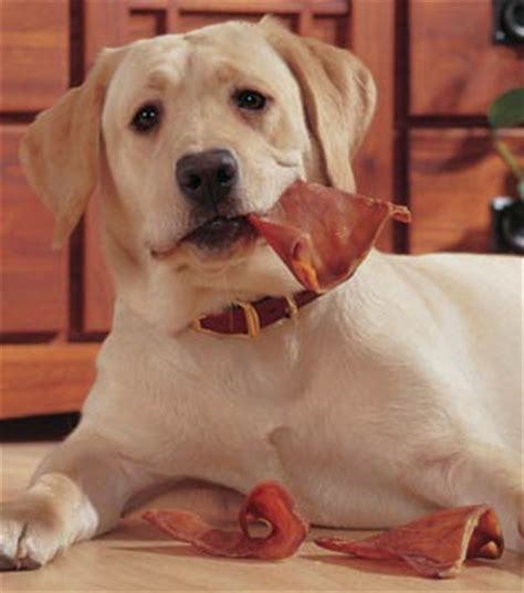 can puppies pig ears pig ear chews recalled due to salmonella food poison journal