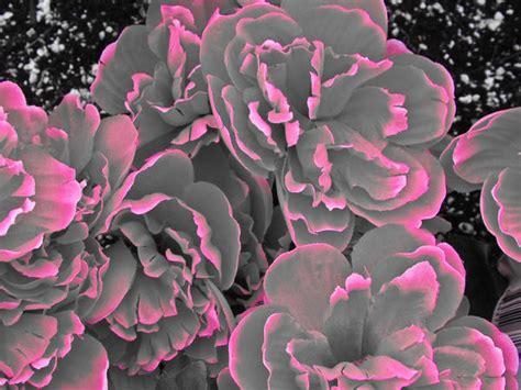 flower wallpaper grey beautyful flowers gray flowers wallpapers