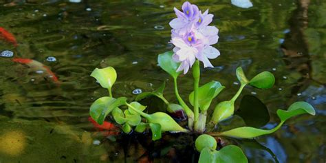 the best plants for a water garden 15 flowers for top 10 floating pond plants an excellent addition to any