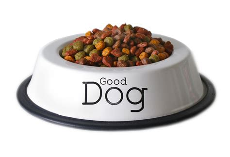 how do dogs eat puppy food why neo pr likes to eat its own food neo pr