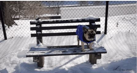 bench press gif dog on bench gifs find share on giphy