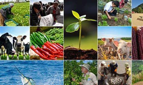 ministerio de alimentaci n ministerio de agricultura ganader 237 a y alimentaci 243 n solo