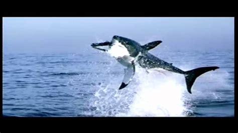 squali volanti squali volanti siamo fottuti