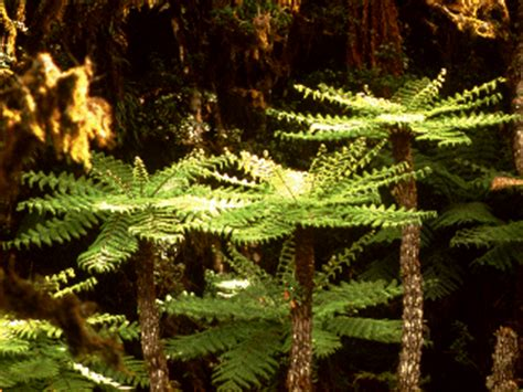 Plants That Live In The Forest Floor by Rainforest Canopy Plants Www Pixshark Images