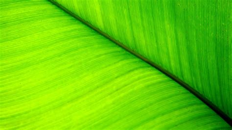 wallpaper with green leaves green leaves wallpapers wallpaper cave