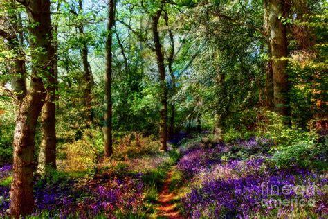 fairy enchanted woods by shabbychic fine art photography