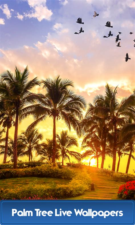 Live Palm Tree Wallpaper by Palm Tree Live Wallpapers Android App Free Apk By Best