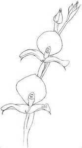 simple orchid drawing orchid drawings