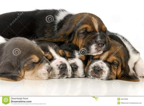 pile of puppies pile of puppies royalty free stock images image 28318289