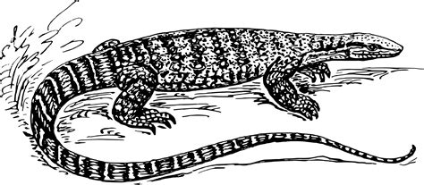 water monitor coloring page clipart monitor lizard