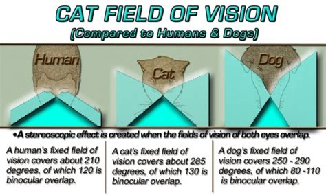 cat color vision cat color vision